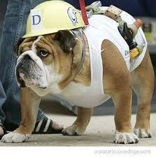 bulldog_construction3.jpg
