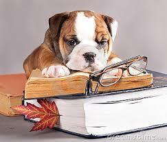 Large_bulldog_reading1